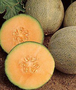 Cantaloupe Iroquois Image