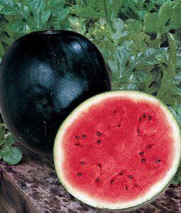 Sugar Baby Watermelon Image