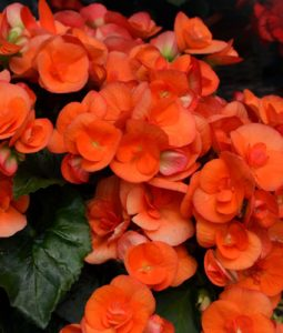 Batik Orange Image