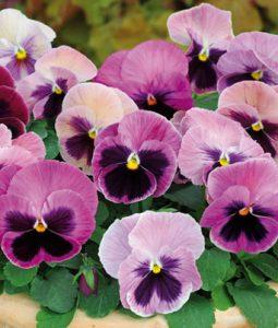 Spring Matrix™ Pink Shades Image