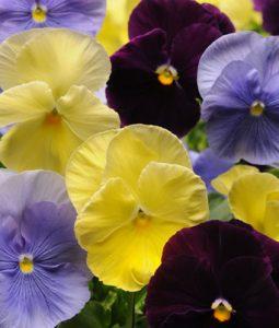 Spring Matrix™ Tricolor Mixture Image