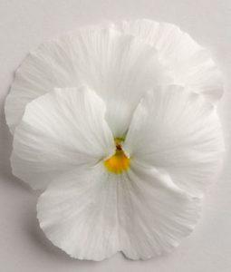 Spring Matrix™ White Image