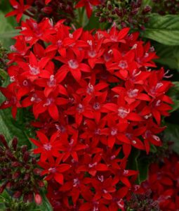 Penta Lucky Star® Series Image