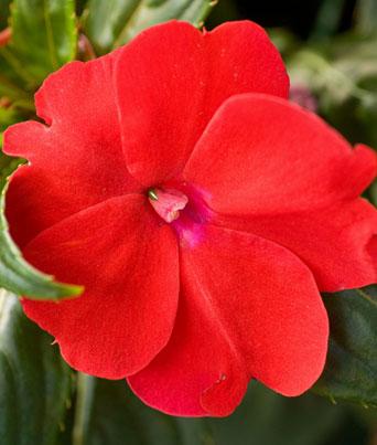 Sunpatien® Compact Red Image