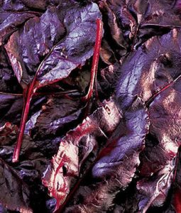 Bulls Blood Beets Image