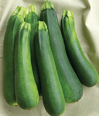 Burpee Zucchini Image