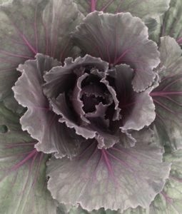 Color-Up Purple Image