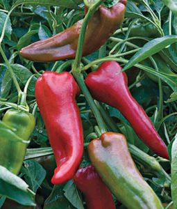 Carmen Hybrid Image