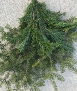 Balsam Cedar Pine Mix Image