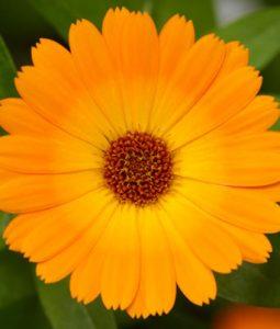 Caleo™ Orange Image