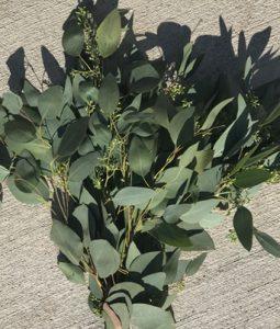 Fresh Seeded Green Eucalyptus Image