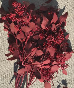 Fresh Seeded Red Eucalyptus Image